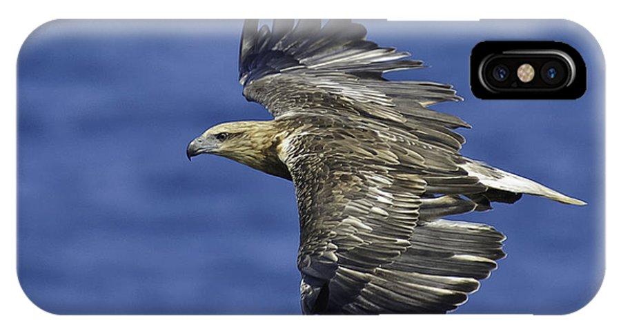 Sea Eagle IPhone X / XS Case featuring the photograph Sea Eagle by Michael Nau