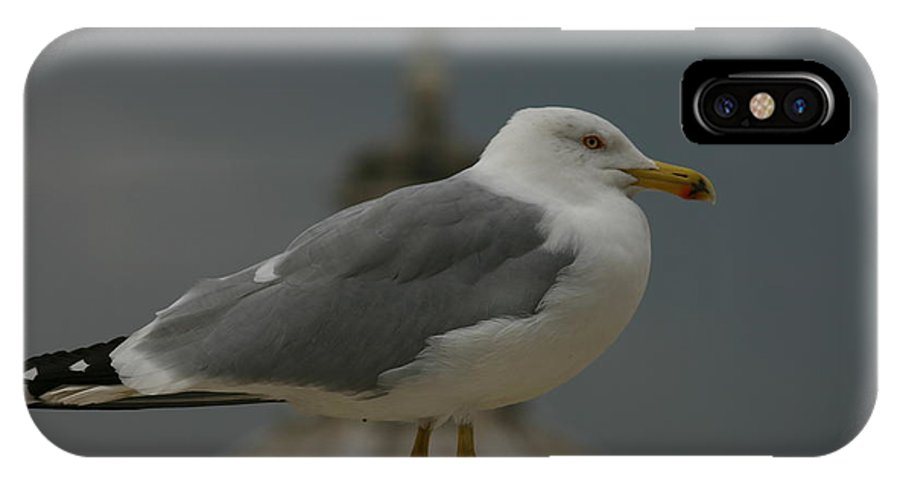 Gull IPhone X Case featuring the photograph Sea Gull by Anika Kanter