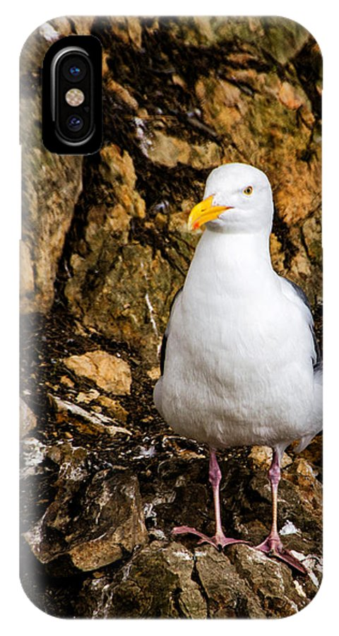 Sea Gull IPhone X Case featuring the photograph Sea Gull by Jon Berghoff