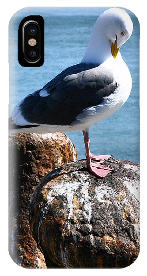 Sea Gull IPhone X Case featuring the photograph Sea Gull by Patricia Betts
