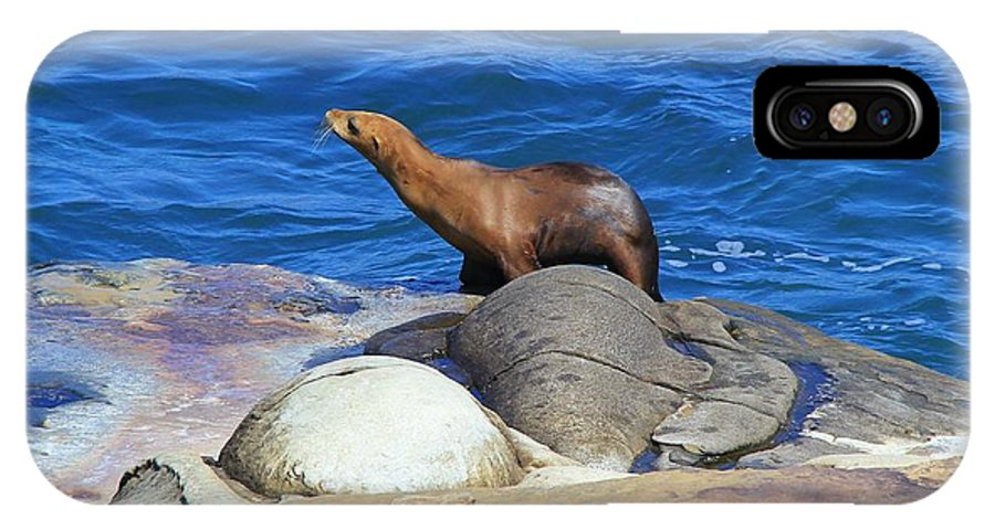Sea Lion IPhone X Case featuring the photograph Sea Lion by Danielle Marie