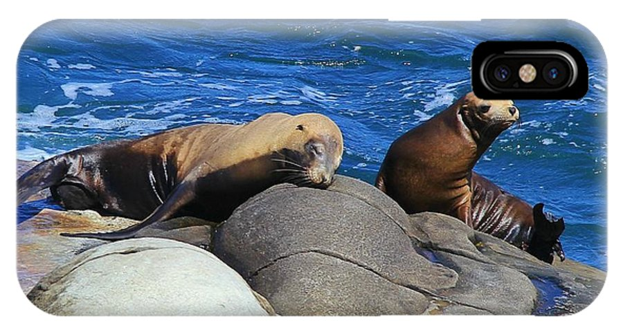 California IPhone X Case featuring the photograph Sea Lions by Danielle Marie