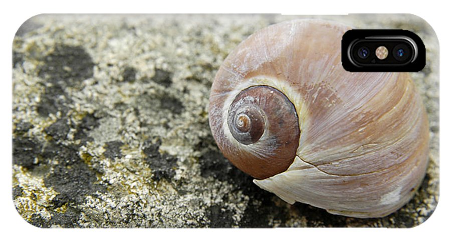 Sea IPhone X Case featuring the photograph Sea Shell by Alana Ranney