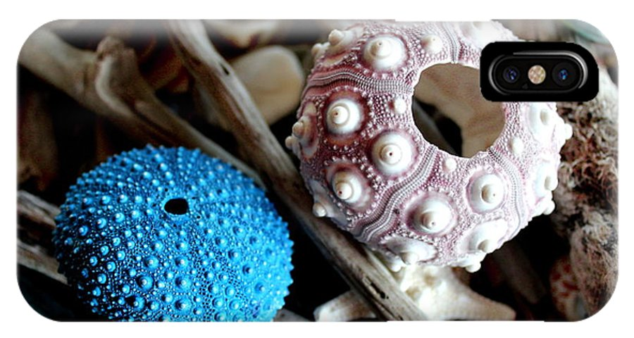 Sea IPhone X Case featuring the photograph Sea Urchin Duo by Cynthia Snyder