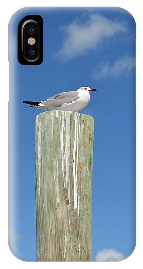 Bird IPhone X Case featuring the photograph Seagull by Jill Kelley
