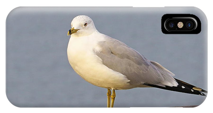 Bird IPhone X Case featuring the photograph Seagull Posing by Brian Maloney