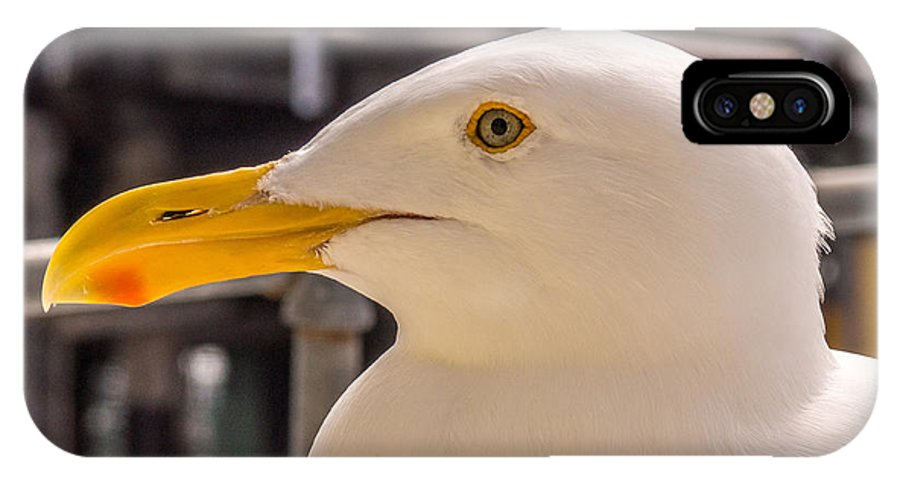 Seagull IPhone X Case featuring the photograph Seagull Profile by Randy Straka