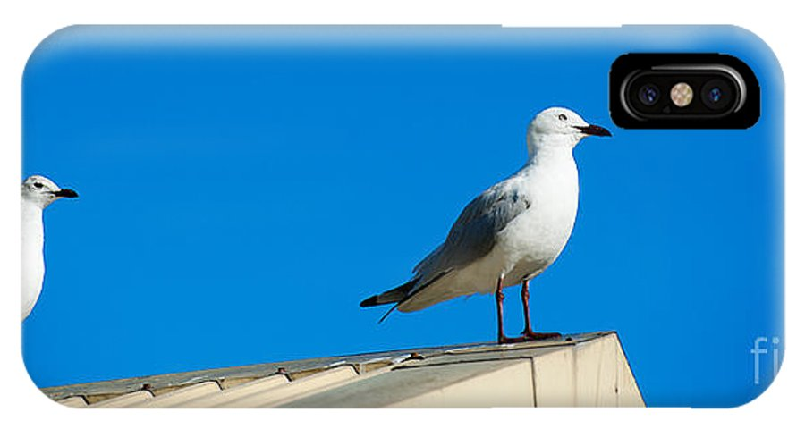 Wildlife IPhone X Case featuring the photograph Seagulls On Roof Top by Yew Kwang