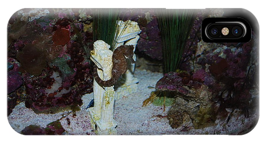 Taken Through Glass Of Aquarium IPhone X Case featuring the photograph Seahorse by Robert Floyd