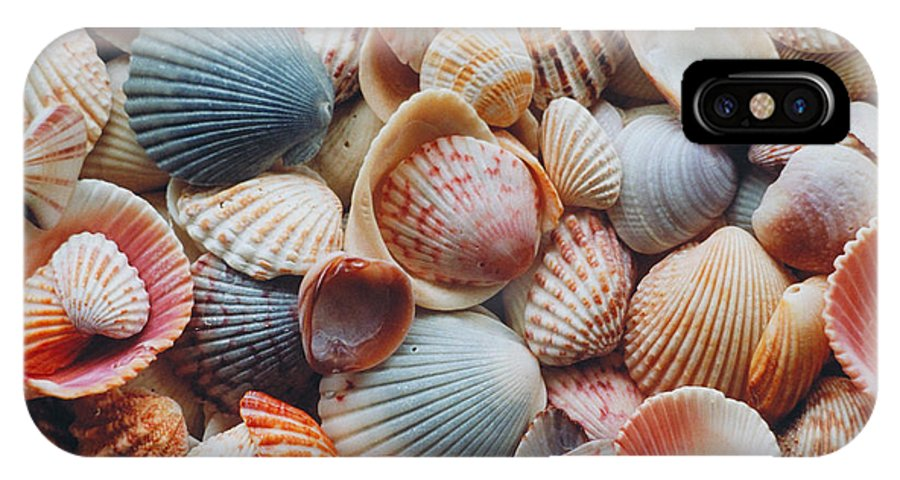 Seashells IPhone X / XS Case featuring the photograph Seashells by David N. Davis