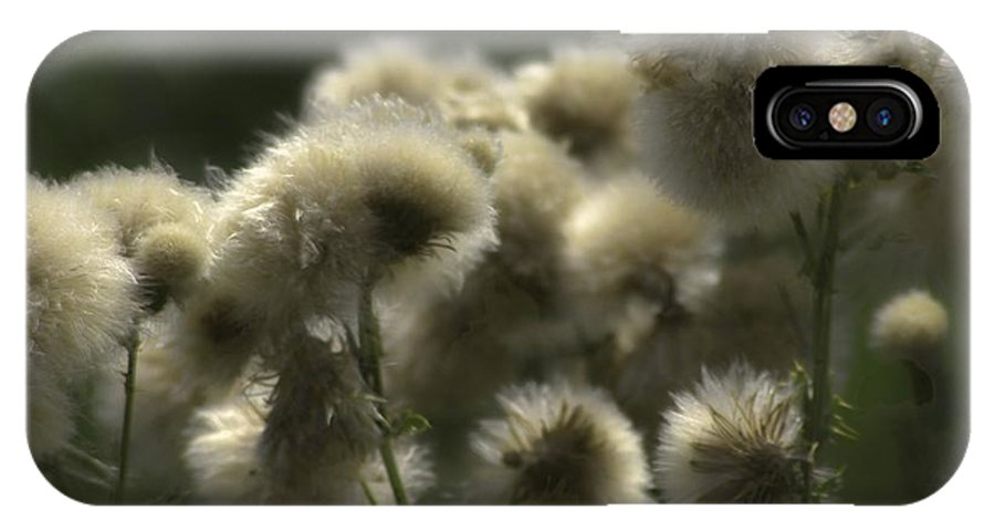 Flower IPhone X Case featuring the photograph Seedhead by Roger Mosher