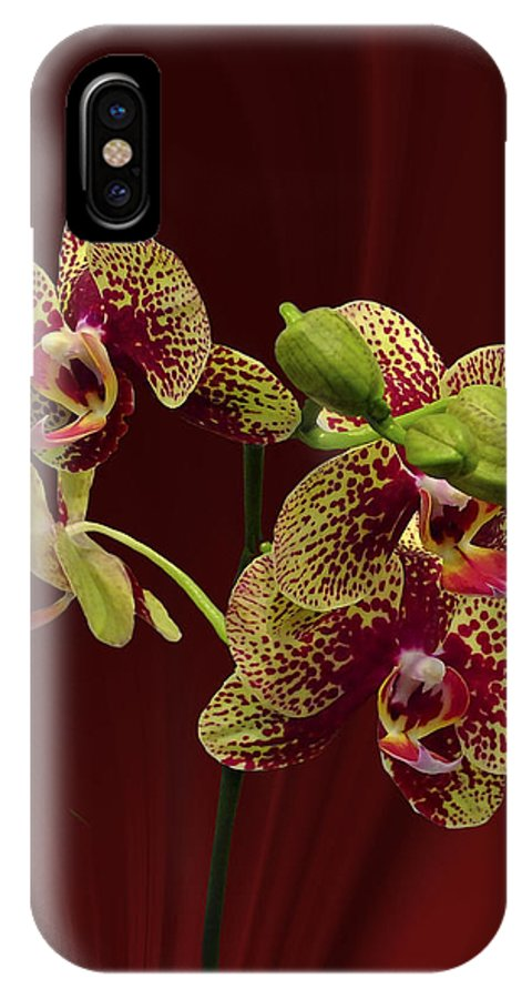 Orchids IPhone X Case featuring the photograph Seeing Red by Judy Johnson