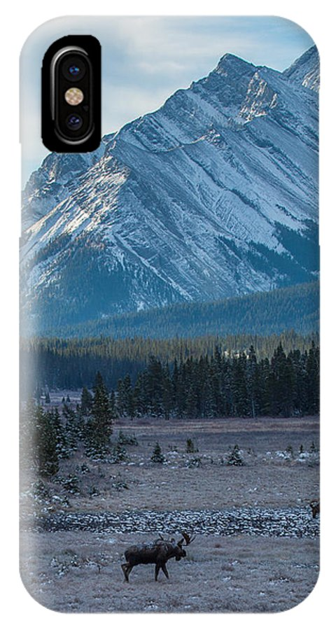 Wildlife IPhone X Case featuring the photograph Seeking by Kevin Dietrich