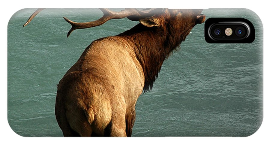 Elk IPhone X Case featuring the photograph Sending A Challenge by Vivian Christopher