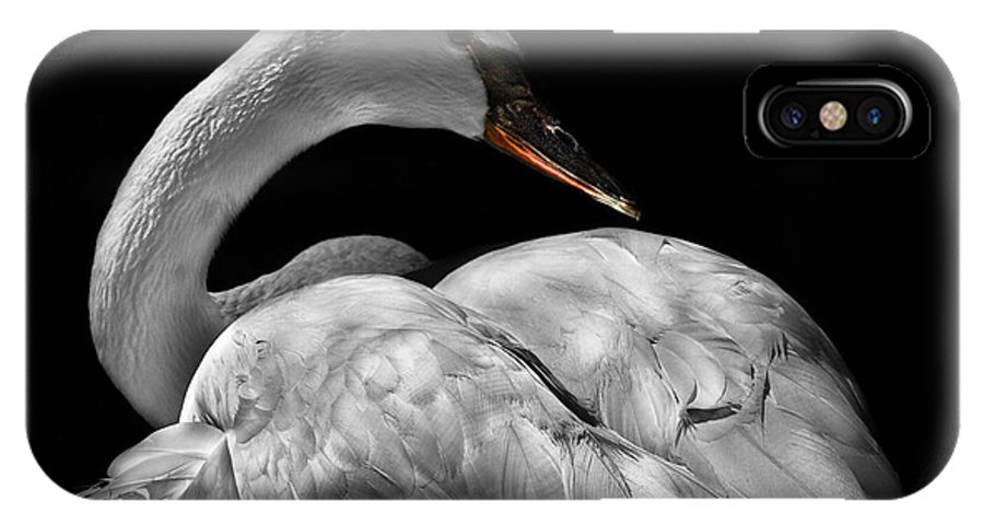 Animals IPhone X Case featuring the photograph Serenity by Debra and Dave Vanderlaan