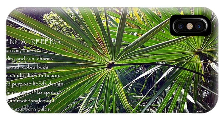 Saw Palmetto Tree Southern Nature Plant Photograph Poem Poetography Original IPhone X Case featuring the photograph Serenoa Repens by Catherine Favole-Gruber