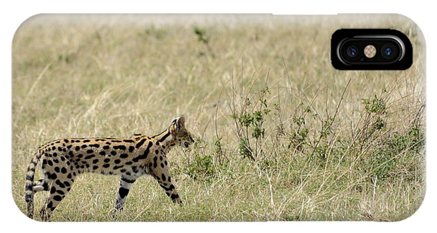 Serval IPhone X Case featuring the photograph Serval Hunting by Ian Ashbaugh