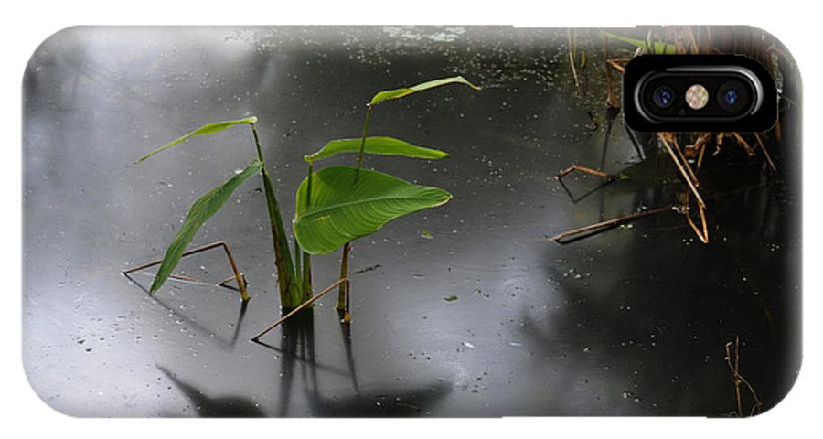 Swamp IPhone X Case featuring the photograph Shadow Mirror Reflection by Jody Lovejoy