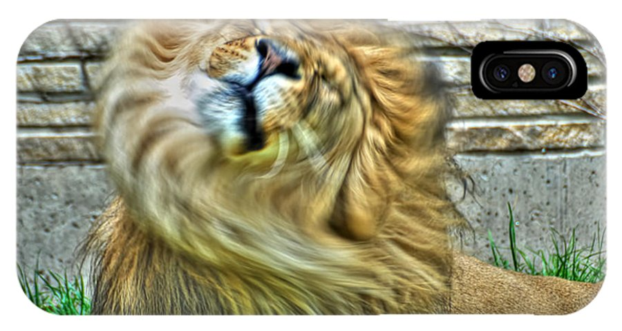 Lion IPhone X Case featuring the photograph Shake It Off Lazy Boy At The Buffalo Zoo by Michael Frank Jr