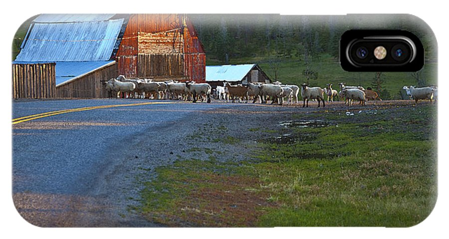 Red Barn IPhone X Case featuring the photograph Sheep Crossing by Theresa Tahara