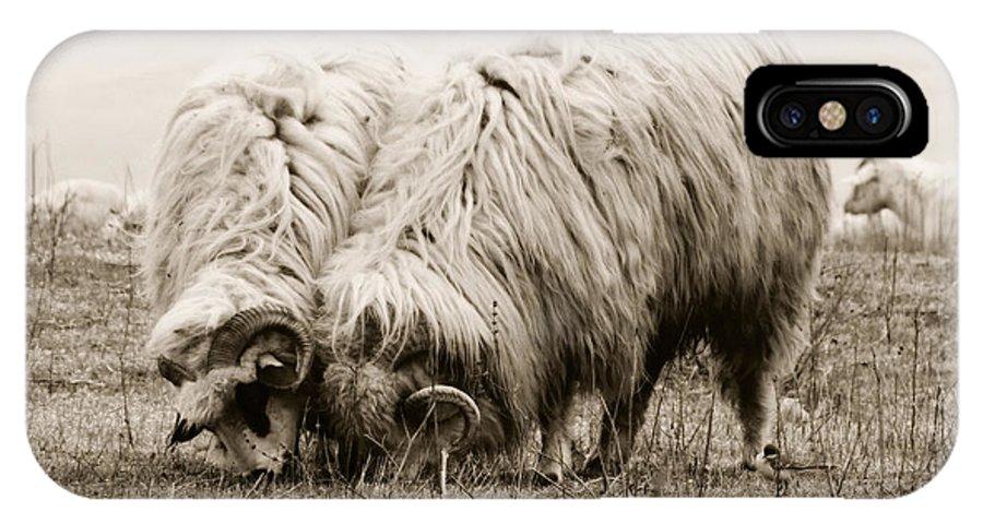 Sheeps IPhone X Case featuring the photograph Sheep Grazing by Gabriela Insuratelu