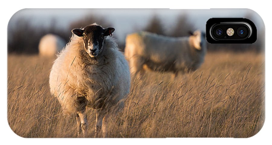 Sheep IPhone X Case featuring the photograph Sheep In A Field by Mark Hooper