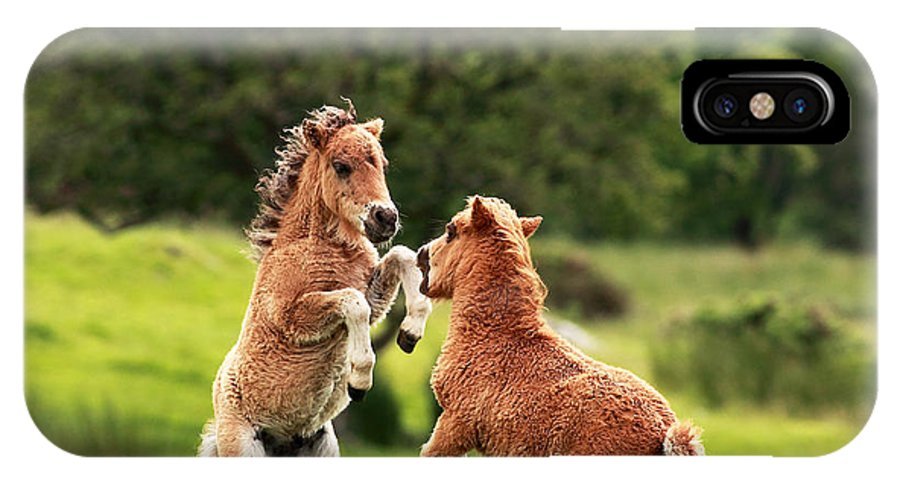 Animal IPhone X Case featuring the photograph Shetland Pony's by Grant Glendinning