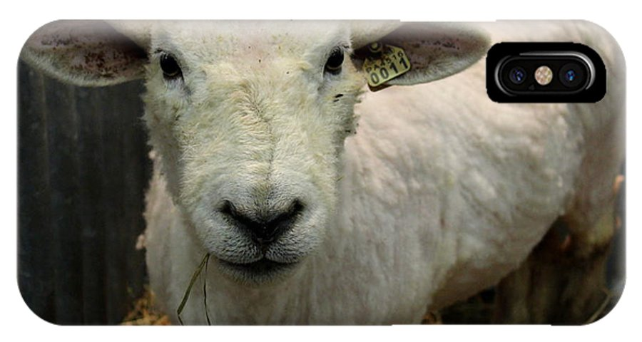 Joseph Skompski IPhone X Case featuring the photograph Shorn Sheep by Joseph Skompski