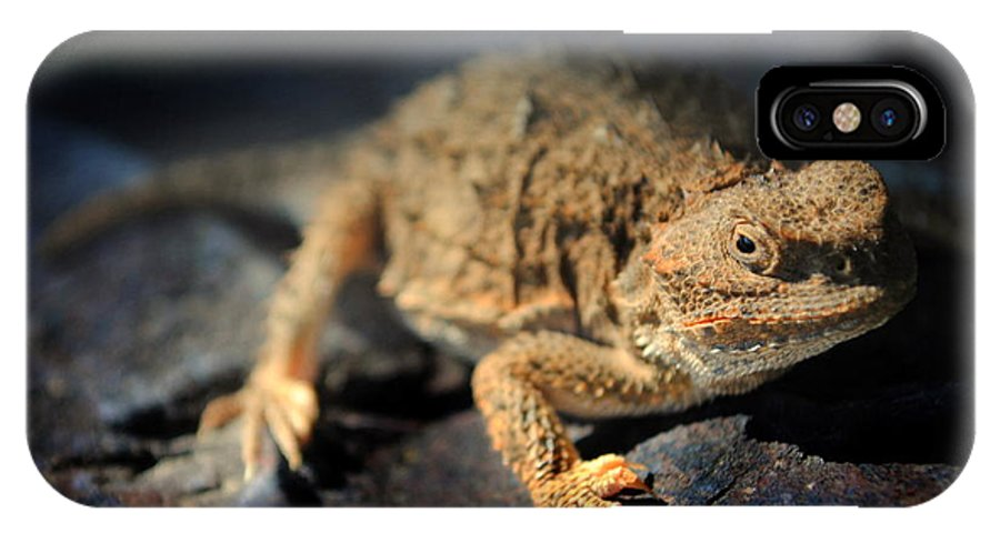 Lizard IPhone X Case featuring the photograph Short Horned Lizard by Nathan Abbott