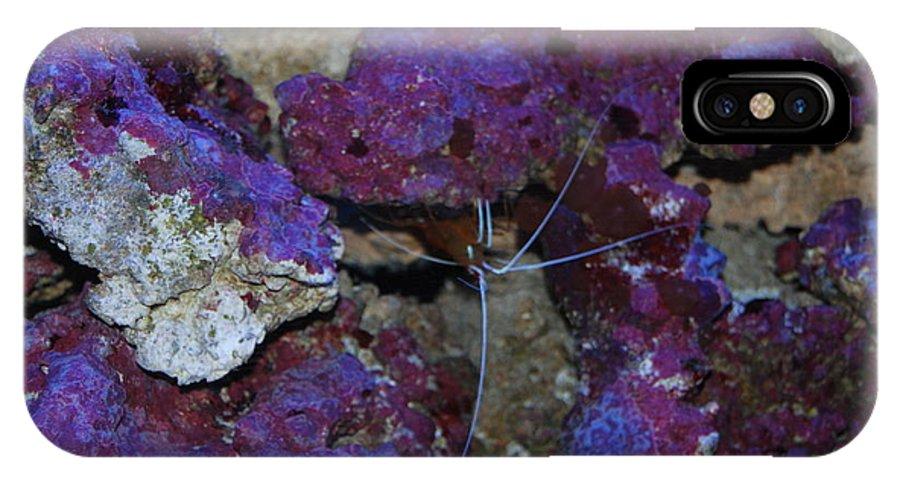 Taken Through Side Of Aquarium IPhone X Case featuring the photograph Shrimp by Robert Floyd