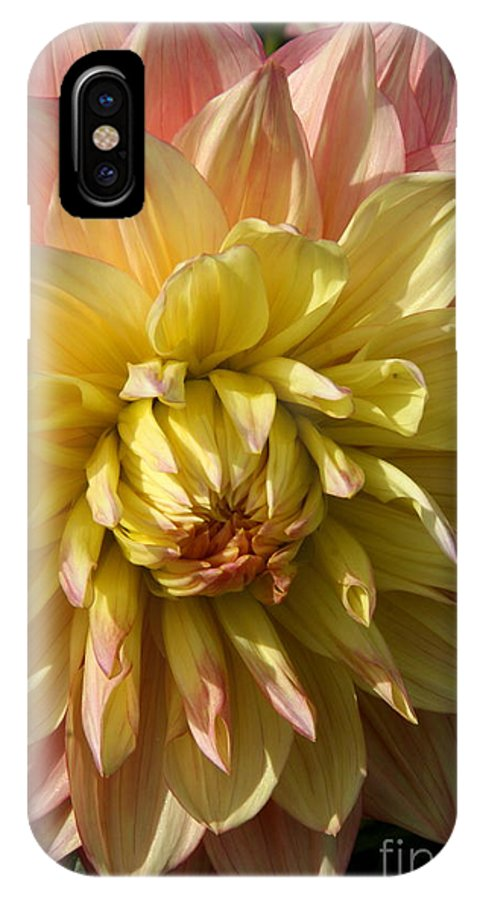 Dahlia IPhone X / XS Case featuring the photograph Shy Dahlia Beauty by Christiane Schulze Art And Photography
