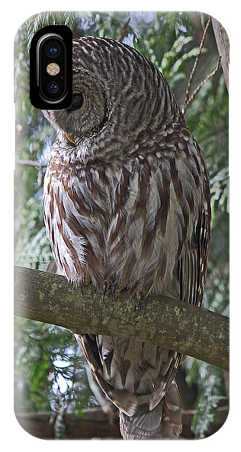 Owl IPhone X Case featuring the photograph Shy by Randy Hall