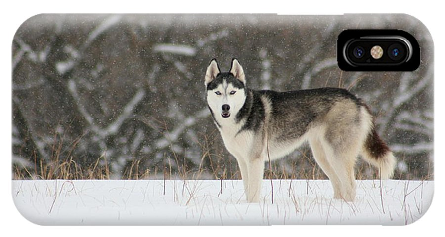 Landscape IPhone Case featuring the photograph Siberian Husky 20 by David Dunham
