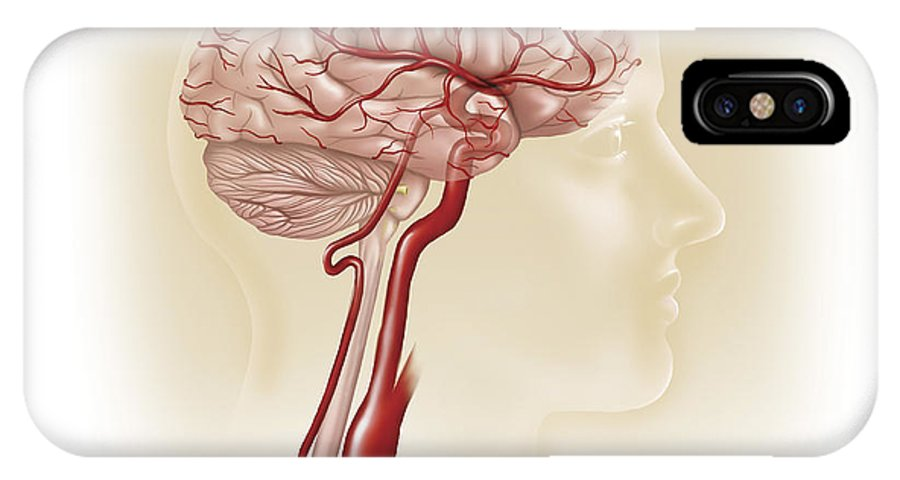 Square Image IPhone X Case featuring the digital art Side View Of Human Brain Showing by TriFocal Communications