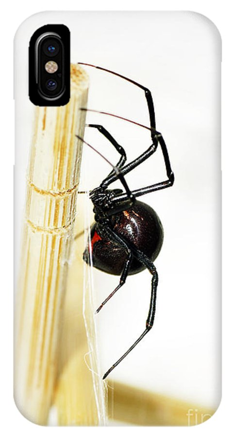 Spider IPhone X Case featuring the photograph Sideview Of Black Widow Spider by Sylvie Bouchard