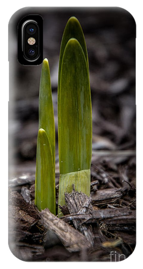 Green IPhone X Case featuring the photograph Sign Of Spring by Ronald Grogan