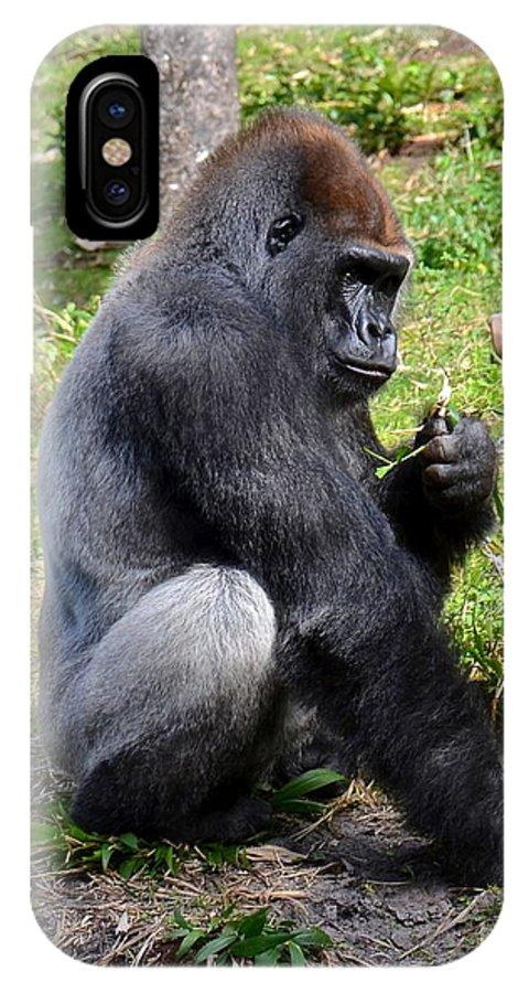 Gorilla IPhone X Case featuring the photograph Silverback Gorilla by Carol Bradley