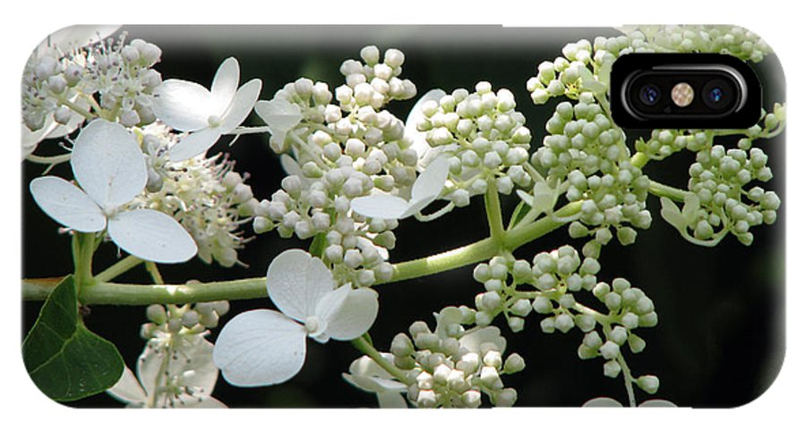 Hydrangea IPhone X Case featuring the photograph Simply by Amanda Barcon