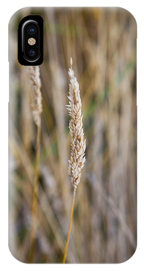 Abstract IPhone X Case featuring the photograph Single Blade Of Tall Field Grass by Joshua Rainey