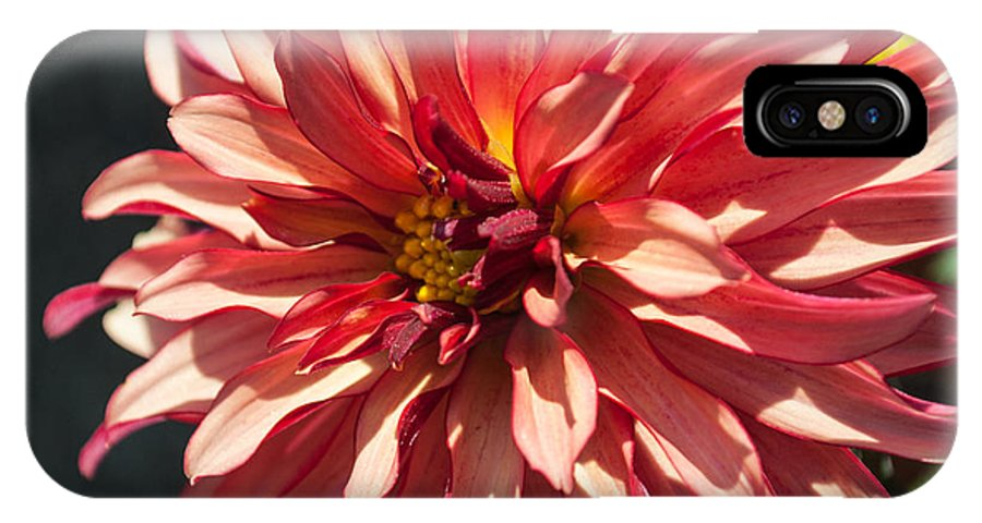 Close Up IPhone X Case featuring the photograph Single Red Bloom by Jill Mitchell