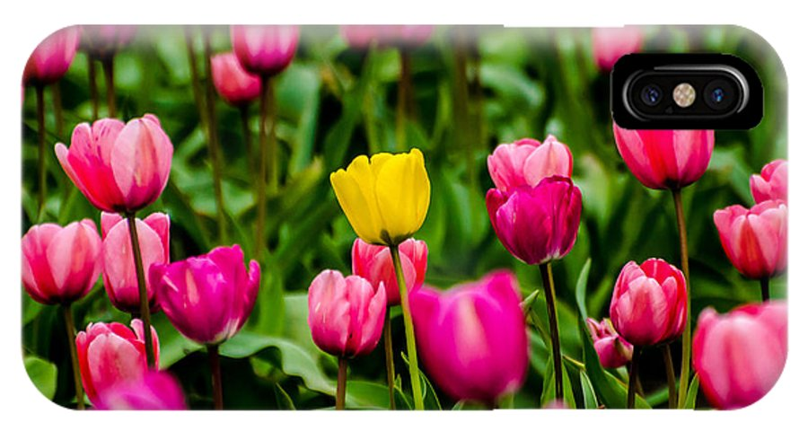 Tulip IPhone X Case featuring the photograph Single Yellow Tulip by Puget Exposure