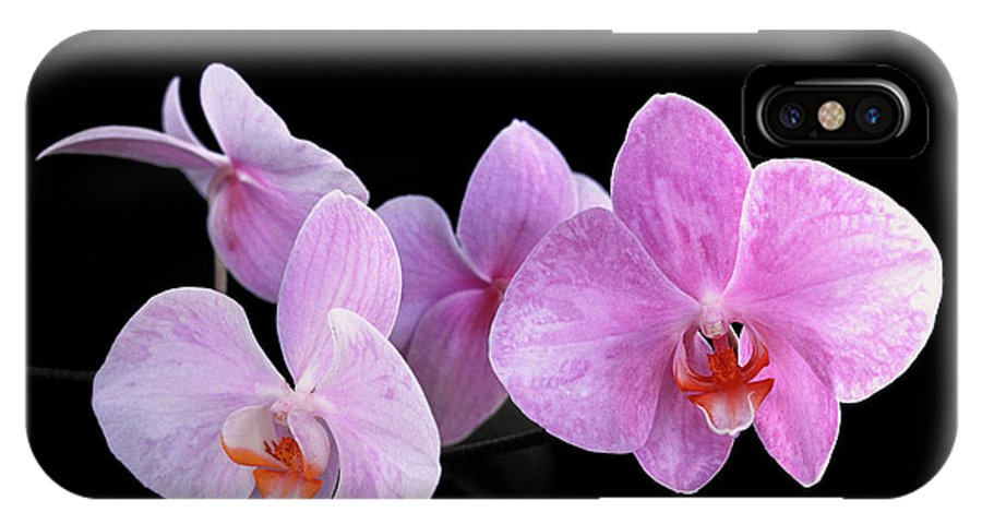 Phalaenopsis IPhone X Case featuring the photograph Sisters by Bill Morgenstern
