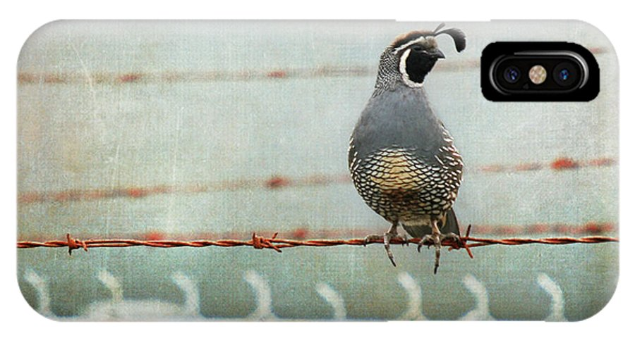 California Quail IPhone X Case featuring the photograph Sittin' On The Fence by Sher Falls