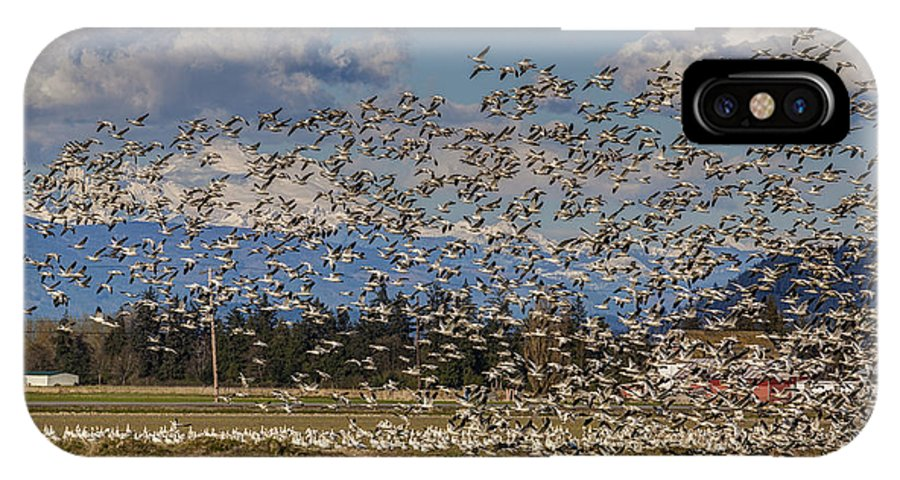 Snow Geese IPhone X Case featuring the photograph Skagit Snow Geese Liftoff by Mike Reid