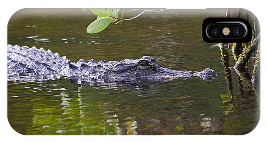 Wildlife IPhone X Case featuring the photograph Skinnydip With Me by Kenneth Albin