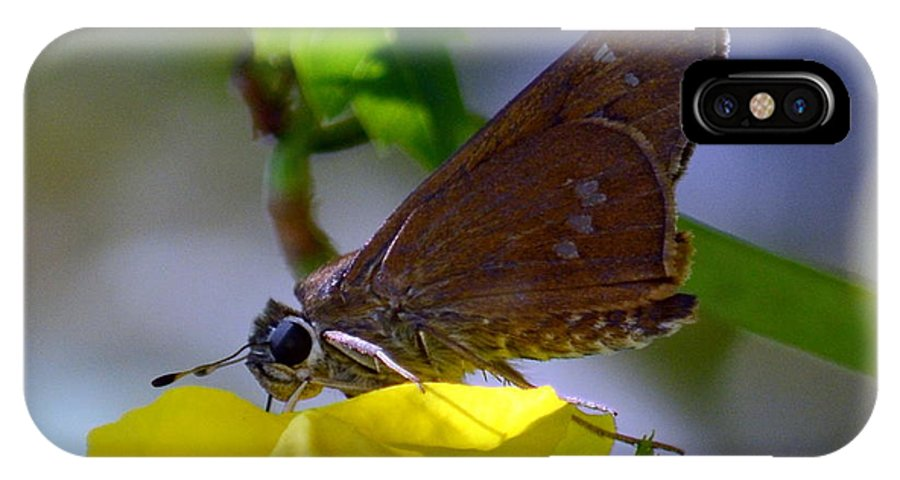 Butterfly IPhone X Case featuring the photograph Skipper Butterfly by Debra Martz