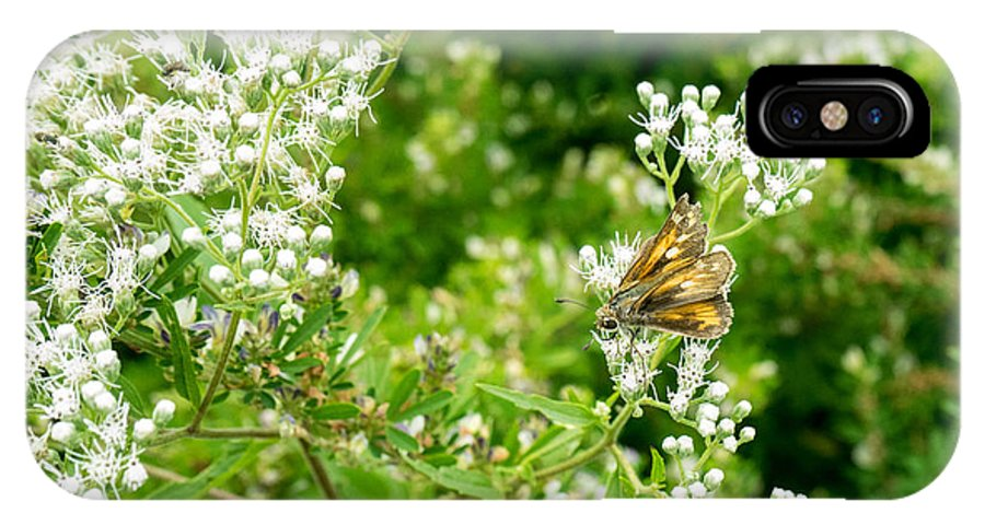Butterfly IPhone X Case featuring the photograph Skipper Drawing Nectar by Douglas Barnett