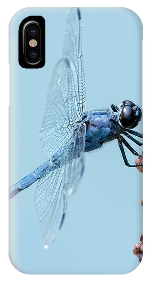 Animal IPhone X Case featuring the photograph Slaty Skimmer by Abeselom Zerit