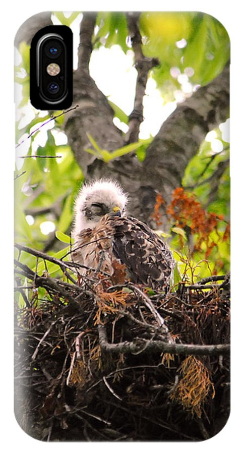 Red Shouldered Hawk IPhone X / XS Case featuring the photograph Sleeping Baby Red Shouldered Hawk by Jai Johnson