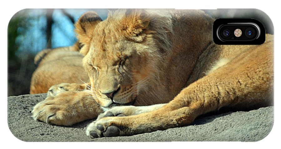 Lion IPhone X Case featuring the photograph Sleeping Prince by Frank Larkin